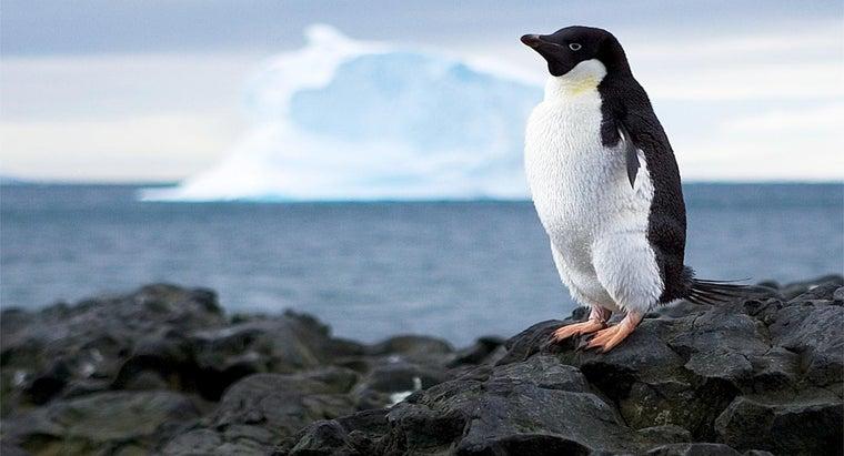 ocean-surrounds-antarctica