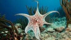 Where Do Octopus Live?