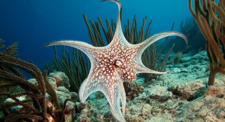 octopus-live