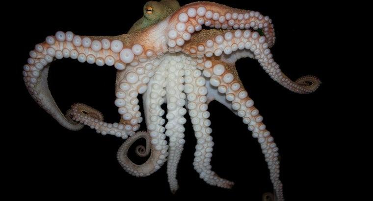 octopuses-eight-legs