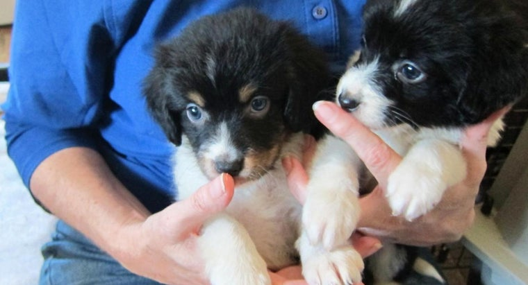 old-should-puppies-before-sold