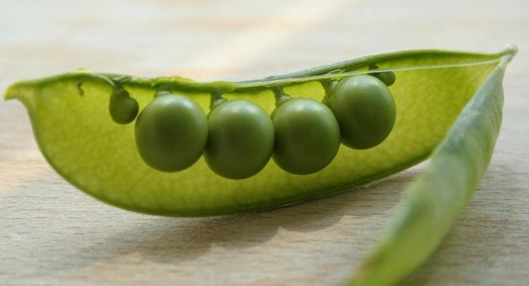 oldest-known-vegetable