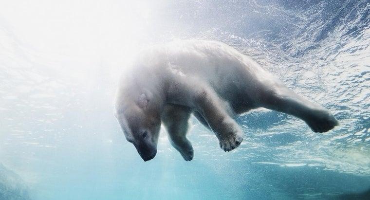 omnivores-arctic-tundra