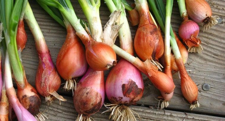 onions-grow-underground