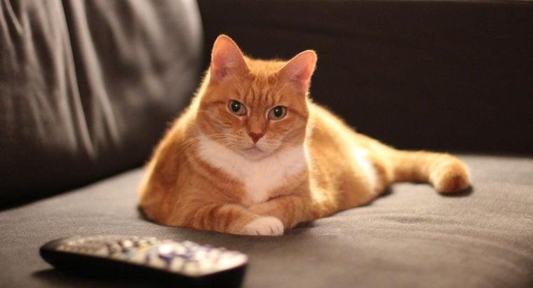 orange-cats-male