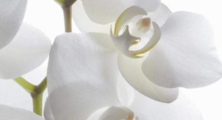 orchids-originate