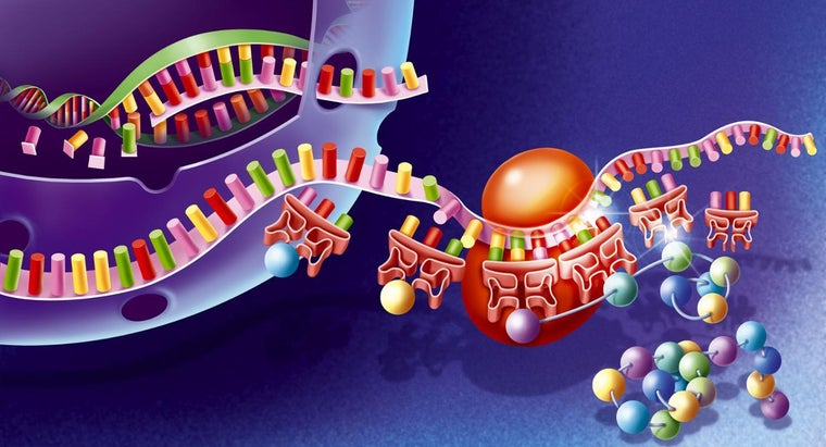 organelle-protein-synthesis