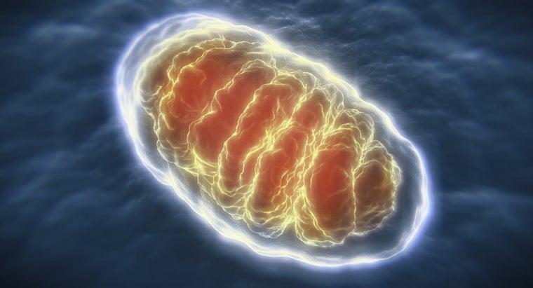 organelles-break-down-sugar-produce-energy