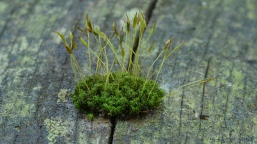 What Organisms Carry Out Photosynthesis?