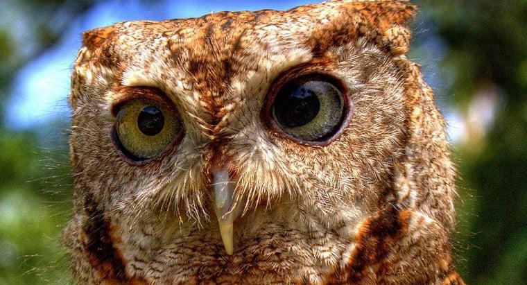 owl-omnivore-herbivore-carnivore