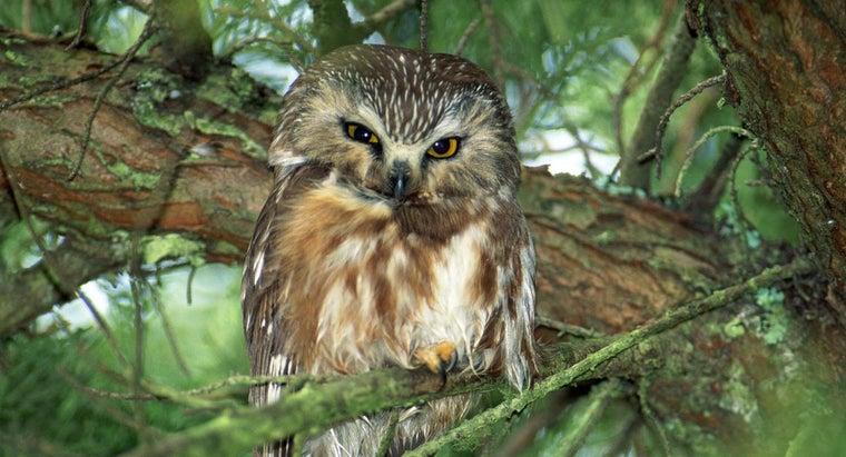 owl-symbolize