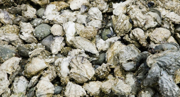 oysters-reproduce