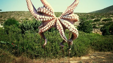 Does the Pacific Northwest Tree Octopus Exist?