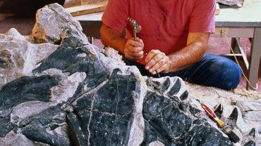 What Do Paleontologists Study?