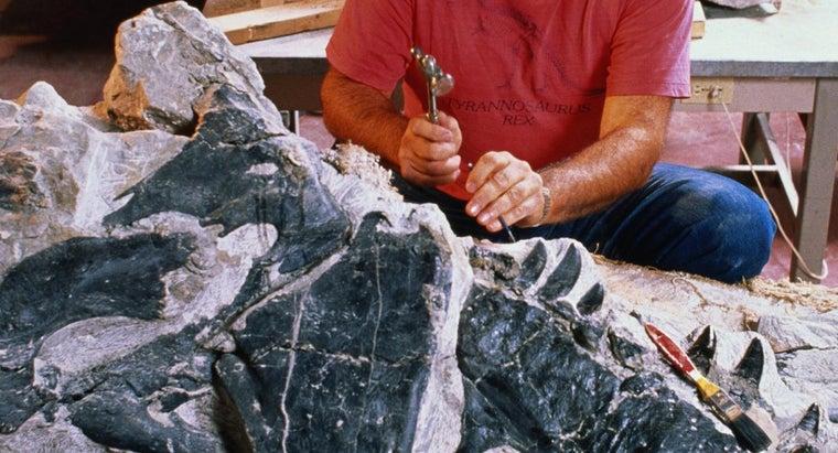 paleontologists-study