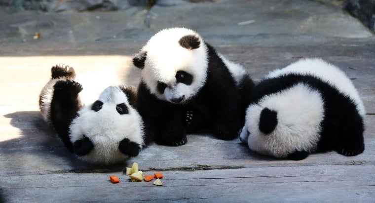 pandas-people-don-t