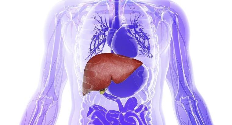 parenchyma-liver