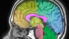 What Part of the Brain Controls Writing?