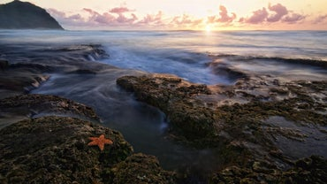 What Part of the Ocean Do Starfish Live In?