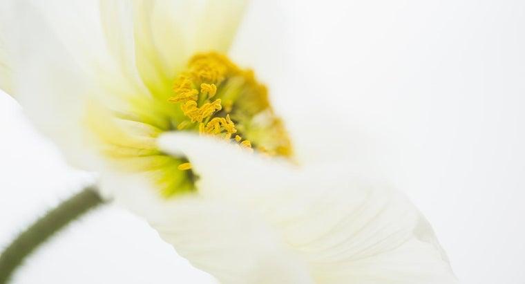 part-plant-flower-attach