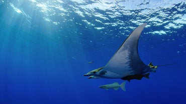 What Are Pelagic Zone Animals?