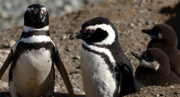 Do Penguins Live in the Tundra Biome? | Reference com
