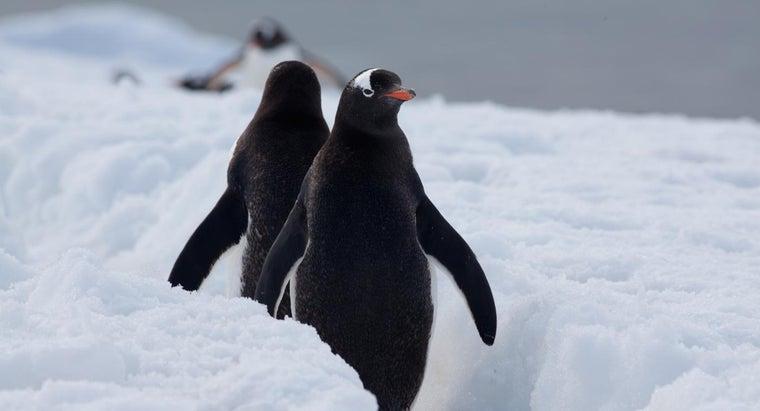 penguins-live-wild