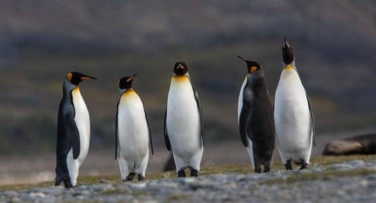 penguins-survive-antarctica
