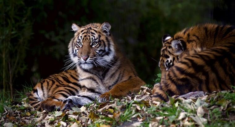 people-kill-tigers
