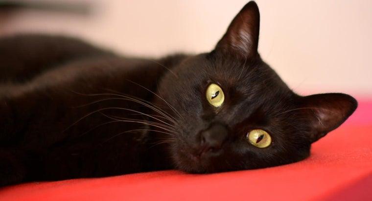 people-suspicious-black-cats
