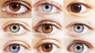 What Are the Percentages of Different Eye Colors?