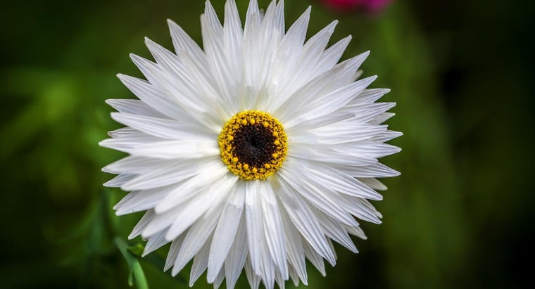 perfect-flower