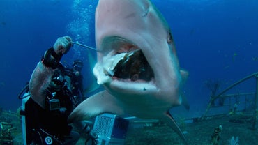 What Is a Person Who Studies Sharks Called?