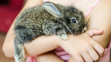 Are There Pet Stores That Sell Bunnies?