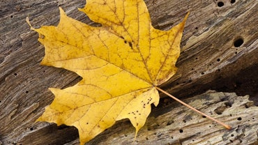 What Is the Photosynthetic Tissue of a Leaf?