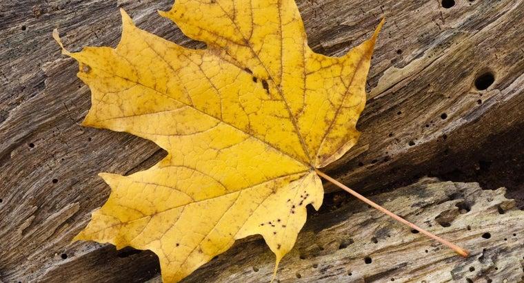 photosynthetic-tissue-leaf