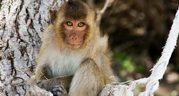 physical-description-monkey