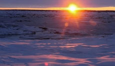 What Are the Physical Features of the Arctic Lowlands?