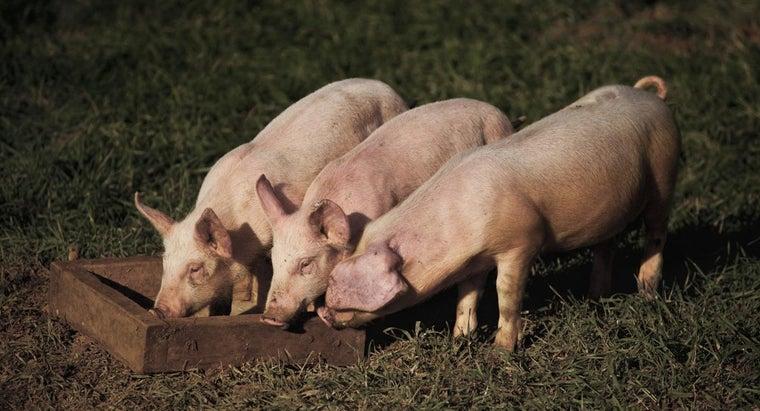 pig-slop