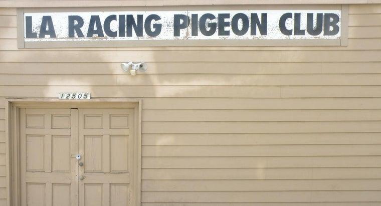 pigeon-racing