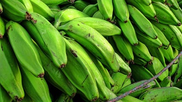 Where Do Plantains Grow?