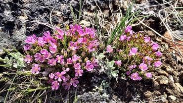 What Plants Grow in Rocky Soil?