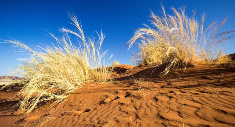 plants-grow-well-sand