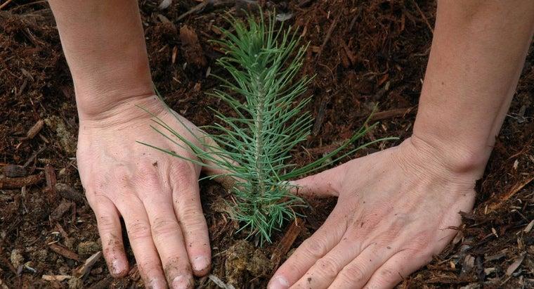 plants-important