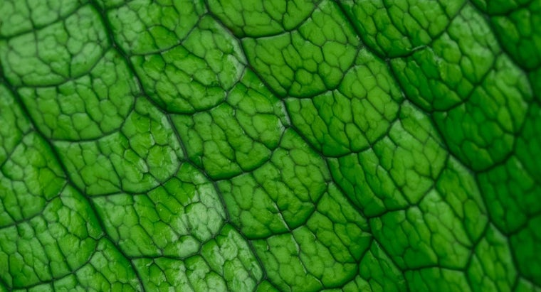 plants-prokaryotic-eukaryotic