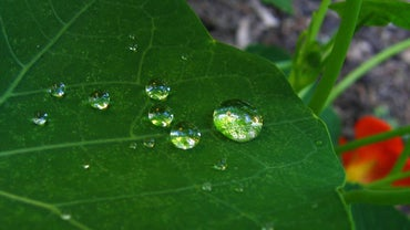 How Do Plants Take in Water?