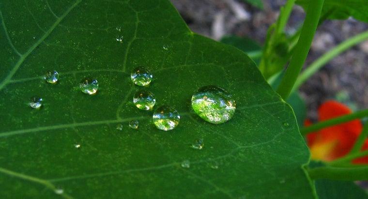 plants-water
