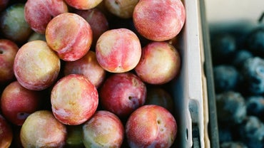 What Is a Pluot?