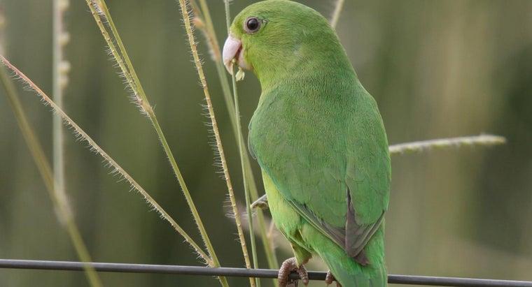 pocket-parrot