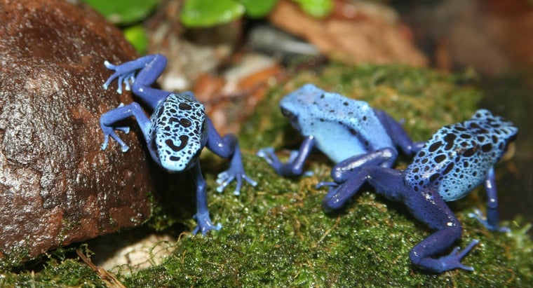 poison-dart-frog-s-habitat